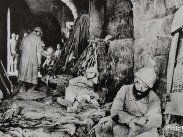 La Grande Guerre / Les  Animaux aussi l'ont vécu, l'ont subi...