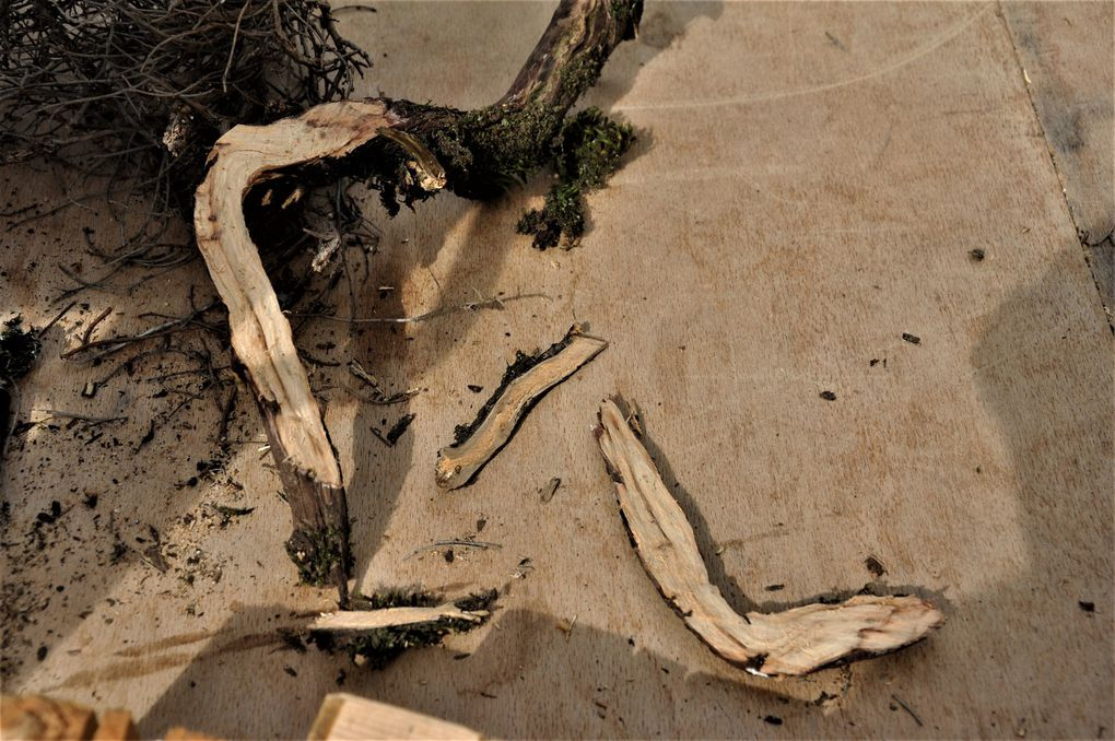Le sciage du bois (3 photos)