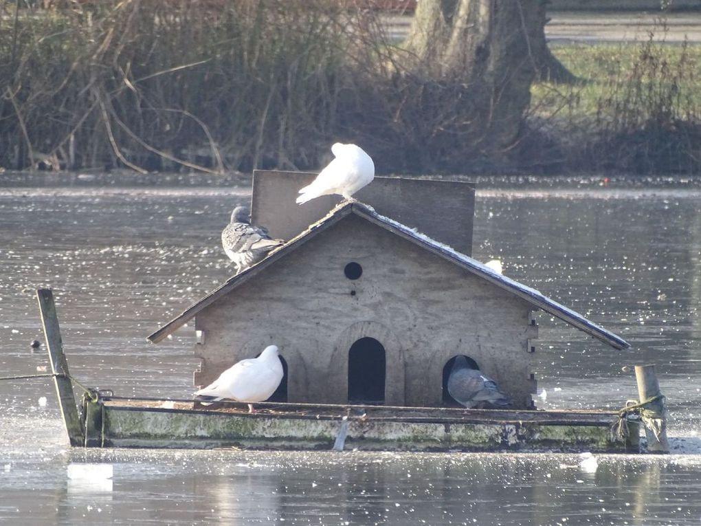 Le Lac de Maison Blanche à Gagny