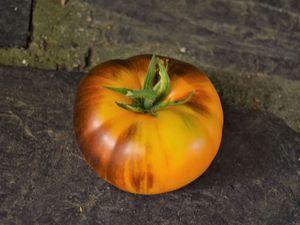 Mon top 5 des tomates 2018 : ananas bleu
