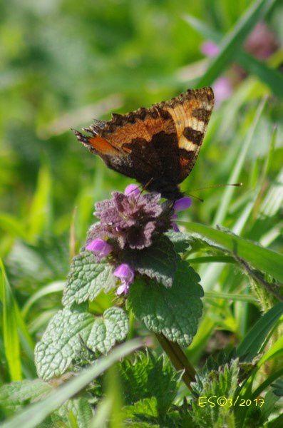 de superbes papillons se sont donné rendez-vous pour mon plus grand plaisir