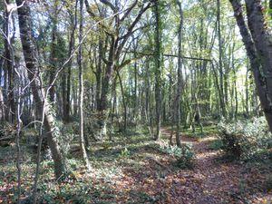 ''Le sentier serpente à travers un bois de chênes et de hêtres puis, nous arrivons au collège…'' Photos : Jacques Blancher (Cliquez pour agrandir)