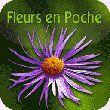Fleurs en poche pour Android, une flore dans votre smartphone