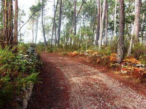 Quelques beaux chemins forestiers à parcourir en prenant son temps.