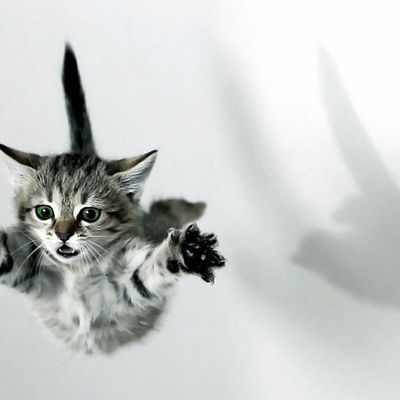 Chaton - Animaux - Cute - Photographie - Wallpaper - Free