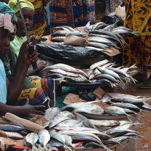 LES JEUNES FEMMES AFRICAINES & L'ENTREPRENEURIAT