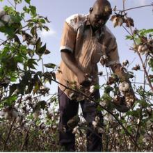 Pourquoi les universitaires du Nord se concentrent-ils sur les problèmes du Burkina Faso en matière d'OGM?