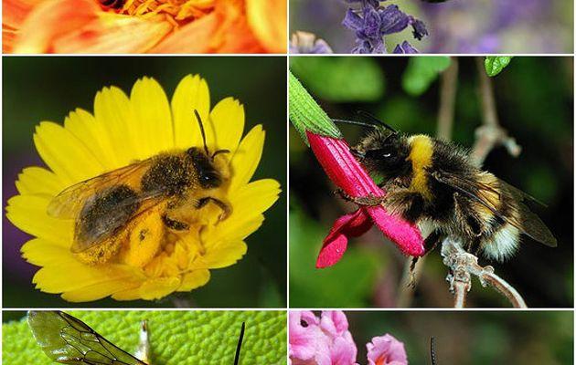 L abeille qui emballe