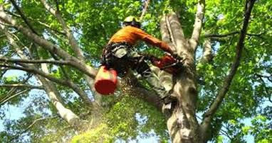 The Advantages of Appointing A Qualified Arborist for Tree Services