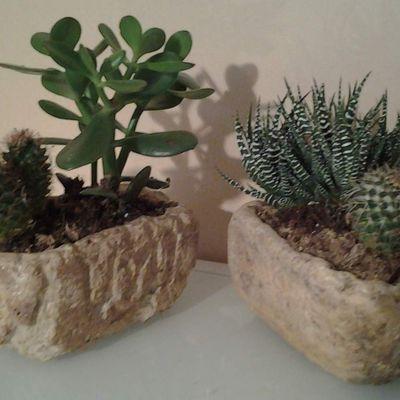 vasques facon vielles pierres, idéal pour succulentes