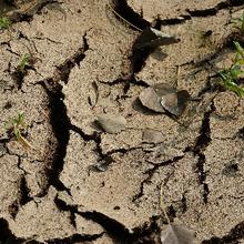 La technologie agricole peut aider à freiner le changement climatique