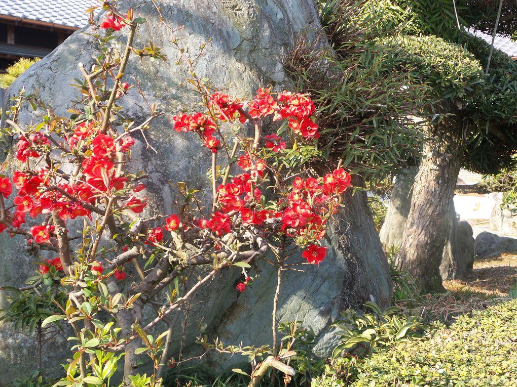 Voici quelques fleurs croisées sur notre chemin