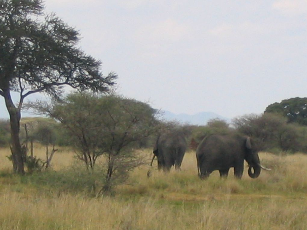 Parc Tarangire - Tanzanie