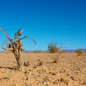 Réchauffement climatique: la planète sera inhabitable bien plus tôt qu'on ne le pense