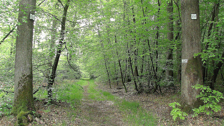 carrefour_Route du Mont l'Ecange_Sentier (parcelle 149)