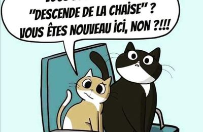 Humour chat