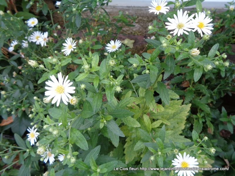Mon jardin Le Clos fleuri en septembre 2019.....