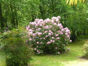 La maison et son parc arboré de chênes et de magnifiques rhododendrons