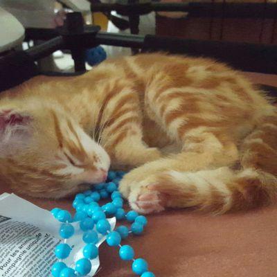 J'ai adopté un chat...on !