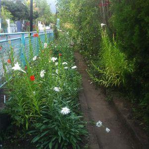 Le jardin de Jacqueline