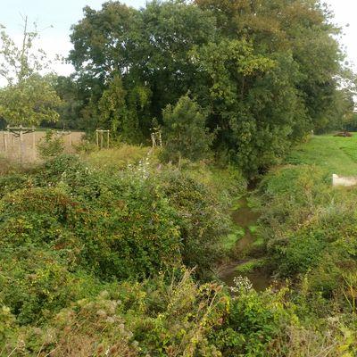 Le ravin du pendu à Hautot-sur-Seine