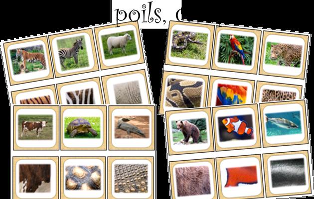 Atelier de manipulation : Pelage, carapace, poils... associer à l'animal correspondant