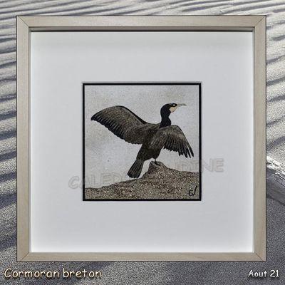 Cormoran breton