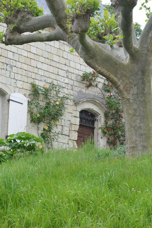 CANDES SAINT MARTIN  - Ancien port de pêche et de batellerie né de la confluence entre la Vienne et la Loire, Candes-Saint-Martin joue le contraste avec ses toits d'ardoise et ses murs de tuffeau blanc dont sont parées les maisons et la collégiale Saint-Martin.