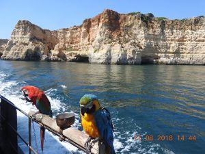 Des flamands, une cigogne, la couvée 2018 d'hirondelles à la maison à Moncarapacho et des péroquets lors d'une excursion en mer